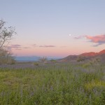 First light and moonset near the Cottonwood entrance of JTNP