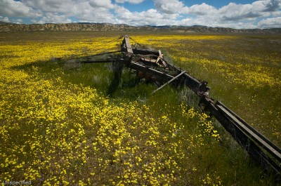 Relics, Carrizo Plain National Monument, California