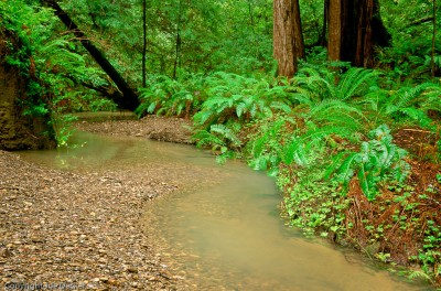 Little Butano Creek, Butano State Park, California