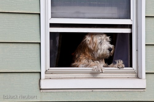 """How much is that doggie in the window?"" You may have heard the song, but I was lucky enough to see the picture. As the dog was repositioning itself in the frame, I repositioned myself to get this shot, again with my Canon 200mm f/2.8. Even at ISO 1000, the image looks quite clean. Copyright  ©2009 Jack Neubart. All rights reserved."