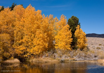 Aspens, Walker Creek