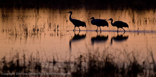 The Tuesday Composition: Working with Silhouettes