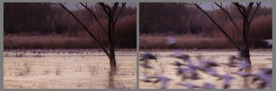 Morning Commute, Bosque del Apache NWR.  Identical framings and a left-right arrangement suggest a sequence.