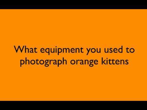 How To Stand Above The Competition: Photographing Orange Kittens