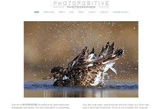 Wordpress Themes for Photographers - David Newton